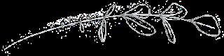 eucalyptus line drawing
