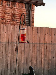Wordless Wednesday - Watching the Hummingbird Feeder