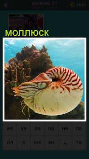 в воде плавает цветной моллюск около кораллов 21 уровень 667 слов