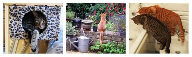 Cat calendar July to September