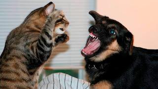 Tu gato odia secretamente el cambio