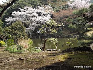 Sakura and pond, Ueno Park, Tokyo - Denise Motard