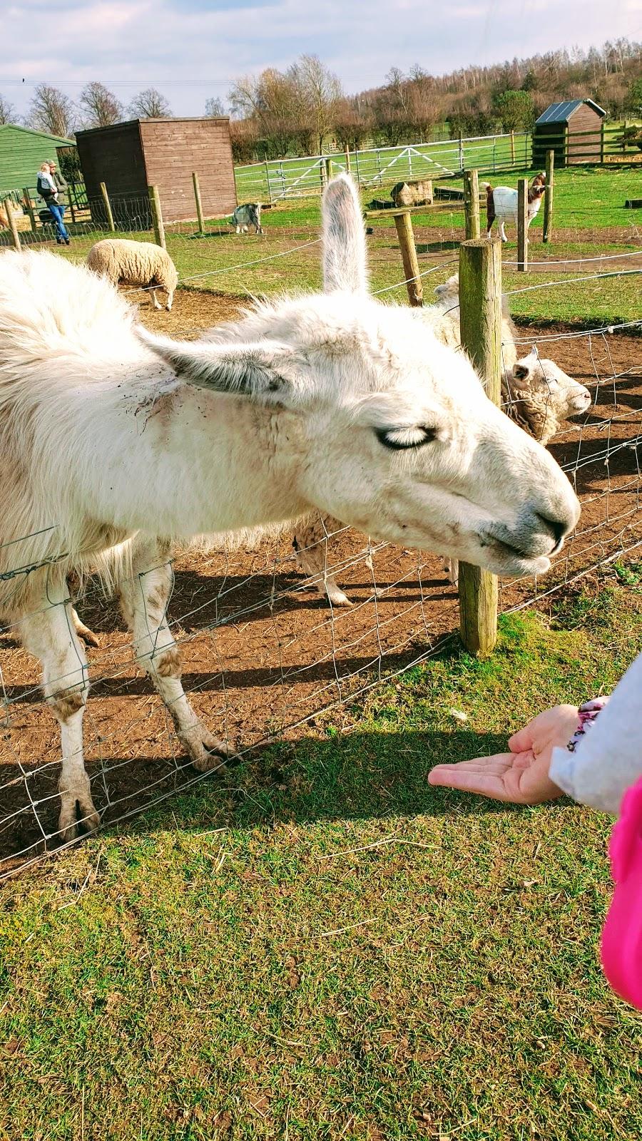 No Drama Llama: But First Llama Take A Selfie
