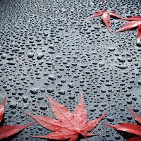 dozhdevaya-voda-na-poverhnosti-stekla