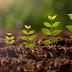 تعرف على مراحل نمو النبات