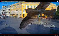 Чарівний птах над Дюком фото веб камера
