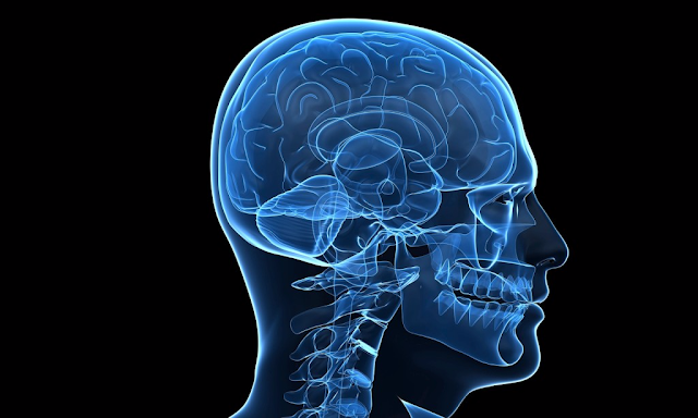 Five Amazing Facts About Human Brain