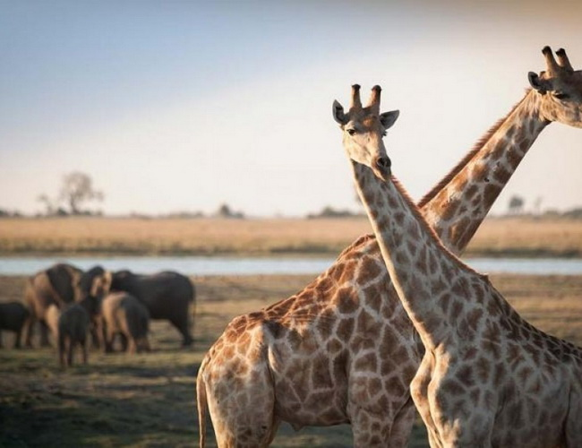 Xvlor Limpopo National Park in Gaza, Mozambique