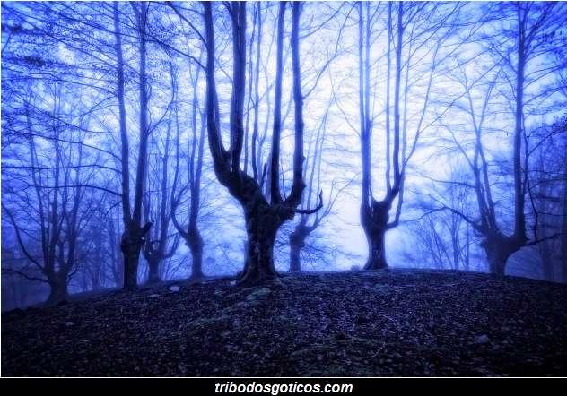floresta gotica escura sombrio galhos secos