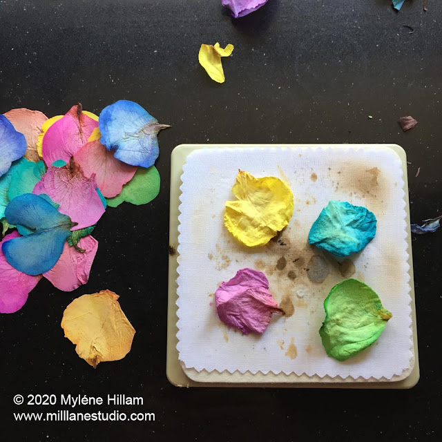 Pressed rainbow rose petals strewn on a black bench alongside a Microfleur flower press with 4 rainbow rose petals