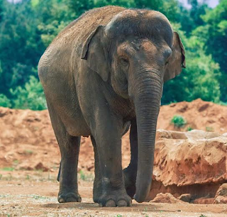 Elephant kills seven year old girl at zoo