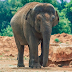 7 year old girl killed by elephant at a zoo(photo)