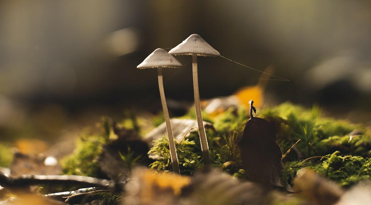 A Guide To Mushroom Marketing-4 Things To Know