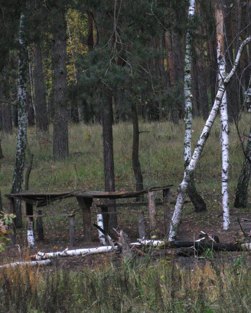Фото Виталия Бабенко: стол и лавки в лесу