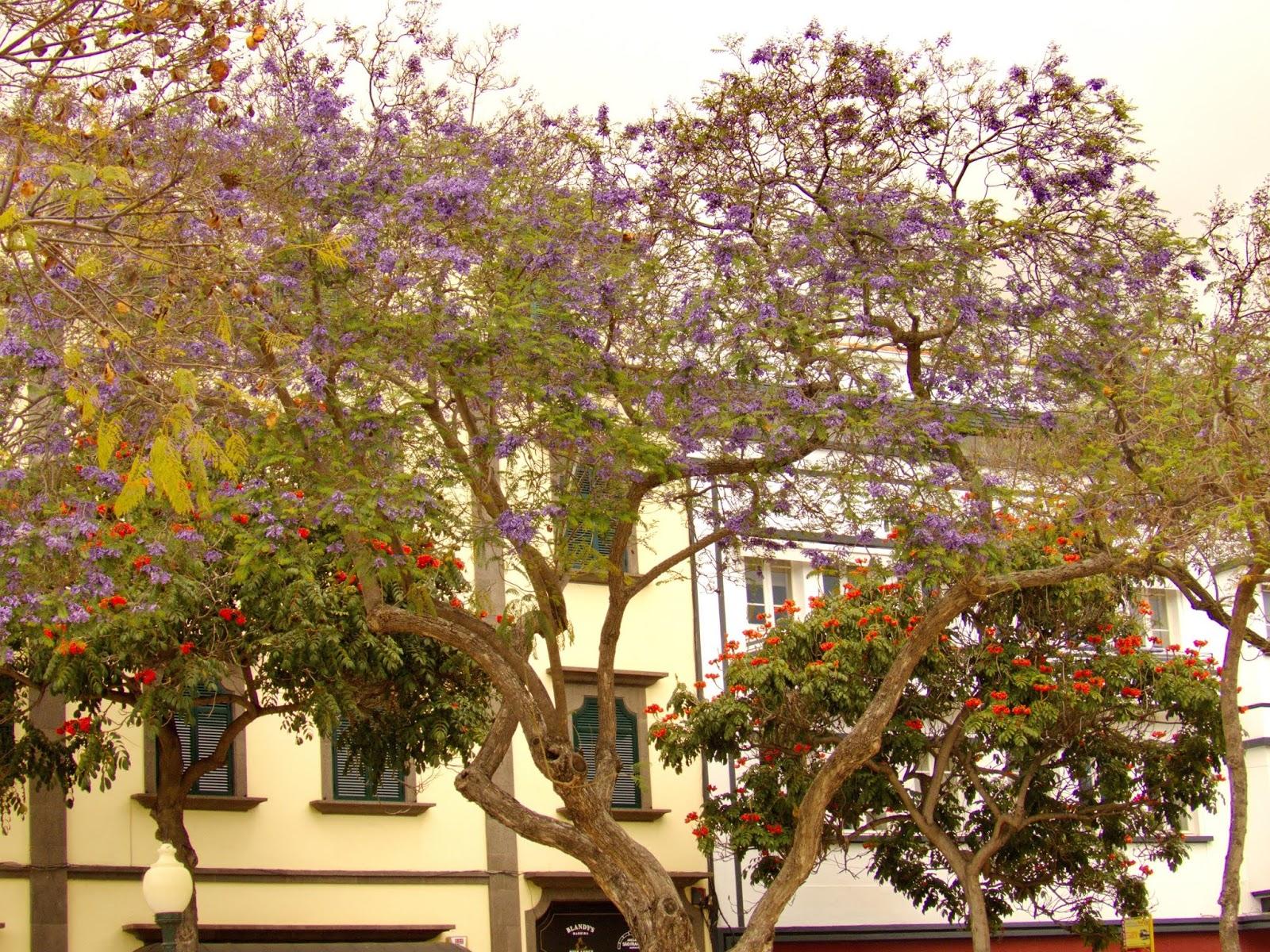 a cidade em flor