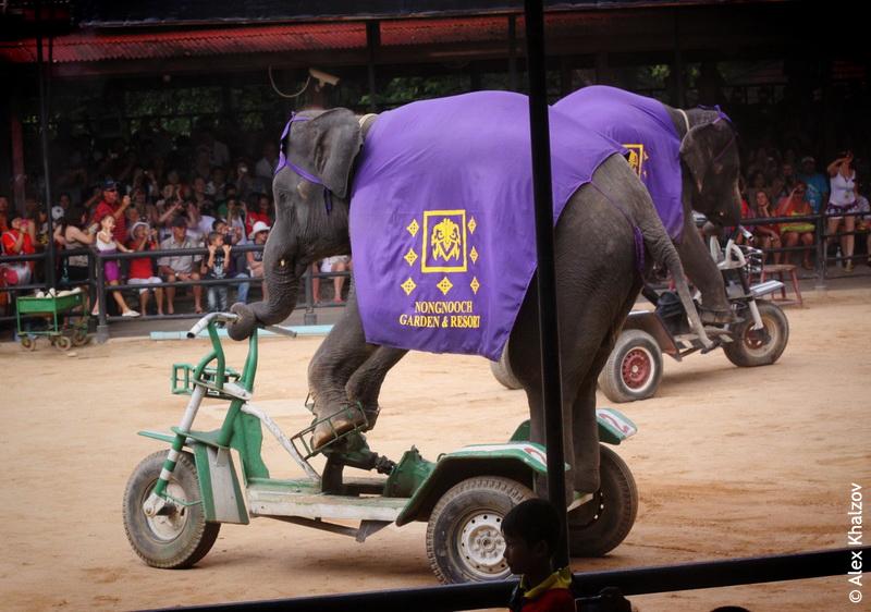 Слоны в саду Нонг Нуч