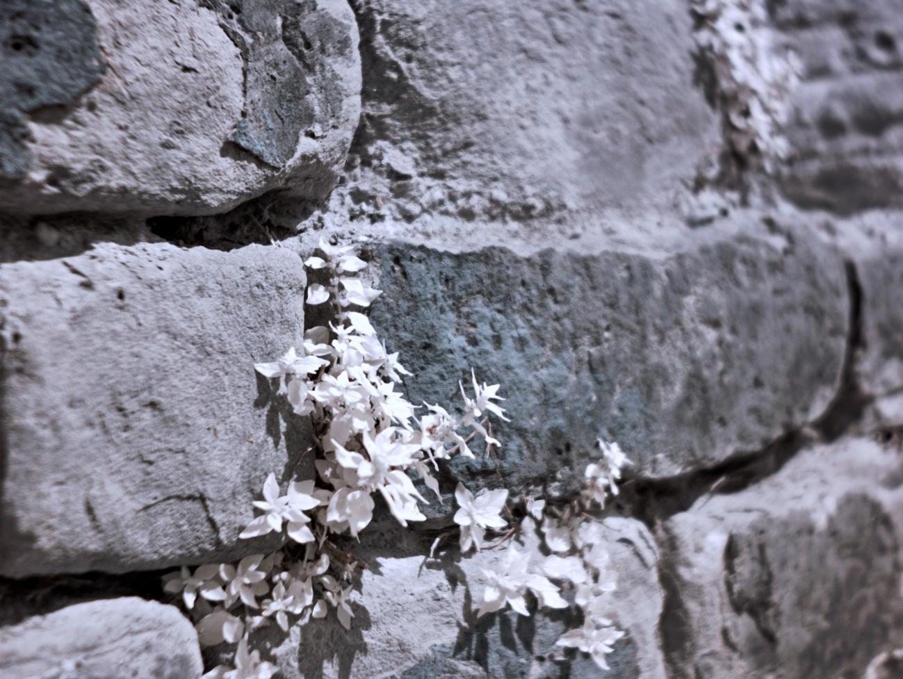 Fassaden&Mauern #30 — Sandsteinmauer in Infrarot