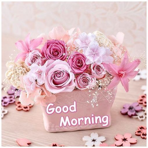 Image result for rose good morning flowers