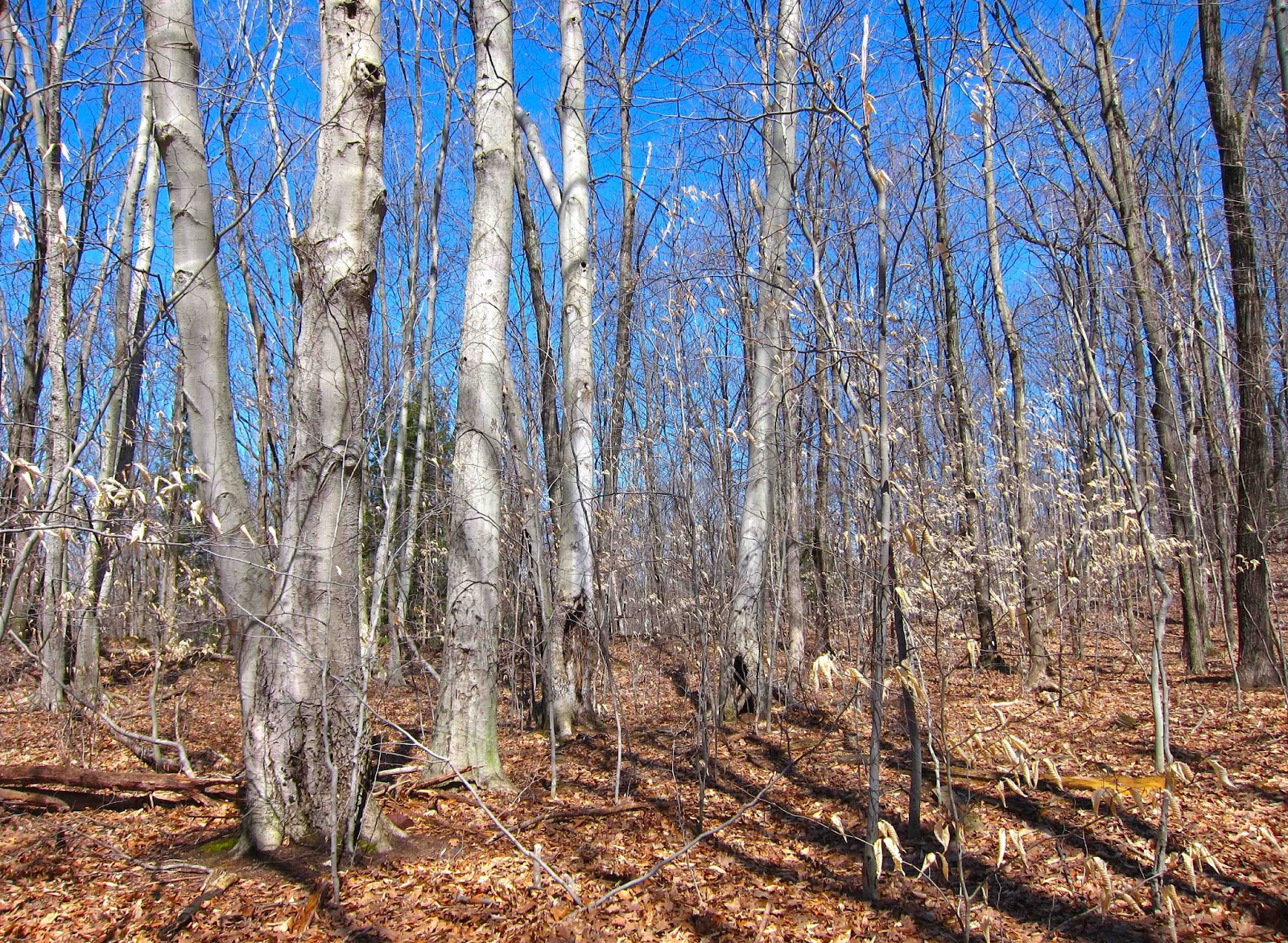 Saratoga Woods And Waterways Beeches In Desperate Straits Proper usage and audio pronunciation (plus ipa phonetic transcription) of the word desperate straits. saratoga woods and waterways beeches