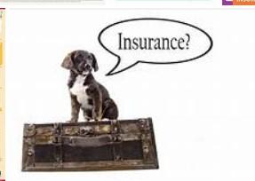 Pet страхування охорони здоров'я для вашої собаки пояснив-ось що вам потрібно знати!