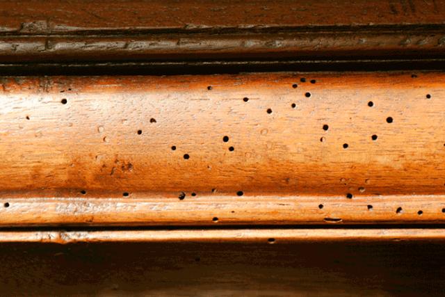 moveis e madeiramento com cupins