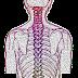 तंत्रिका तंत्र (Nervous System)।