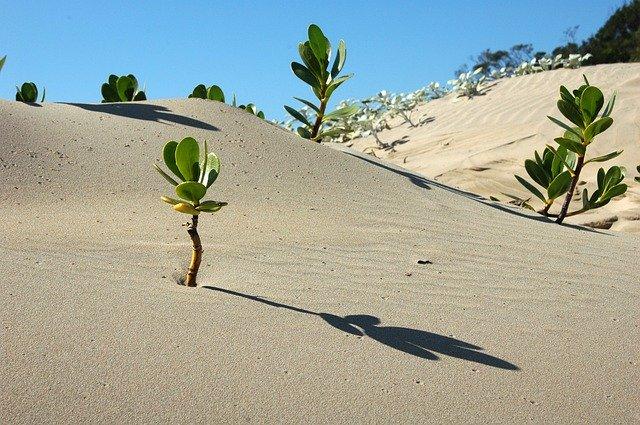 रेगिस्तानी मिट्टी