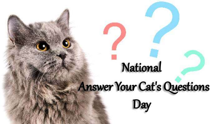 National Answer Your Cat's Questions Day Wishes Awesome Images, Pictures, Photos, Wallpapers
