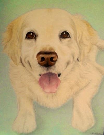 Pet Portrait Golden Retriever