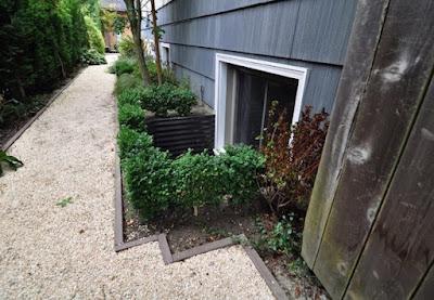 rastinje ispred podrumskog prozora