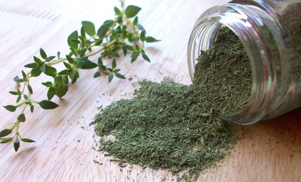طريقة زراعة الزعتر الأخضر في المنزل والعناية بها