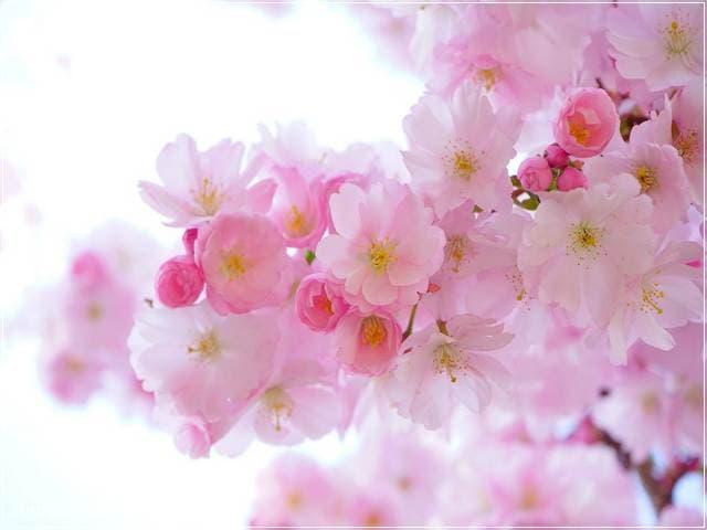 صور زهور 6 | Flowers Images 6