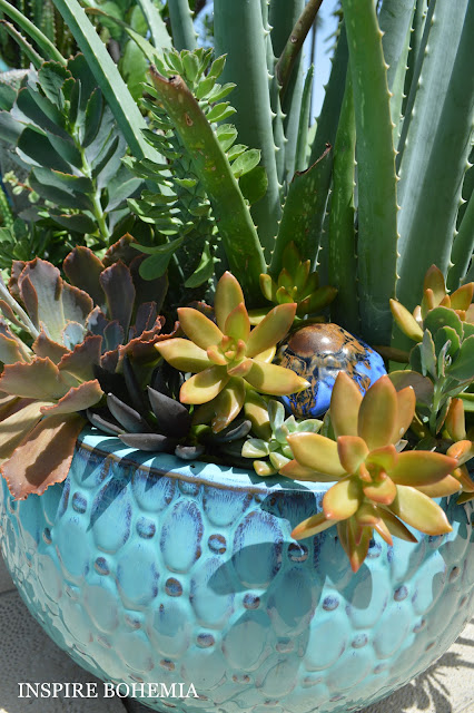 Echeveria Black Prince Golden Sedum Aloe Succulent Planter Poolside - Designer Cactus and Succulent Planters Garden Design Inspire Bohemia - Miami and Ft. Lauderdale Succulent Business