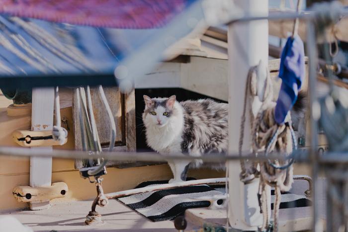 house boat cat brisbane