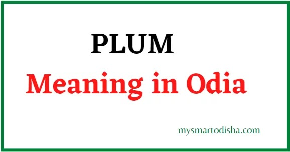 Plum Meaning in Odia, Plum Odia Meaning