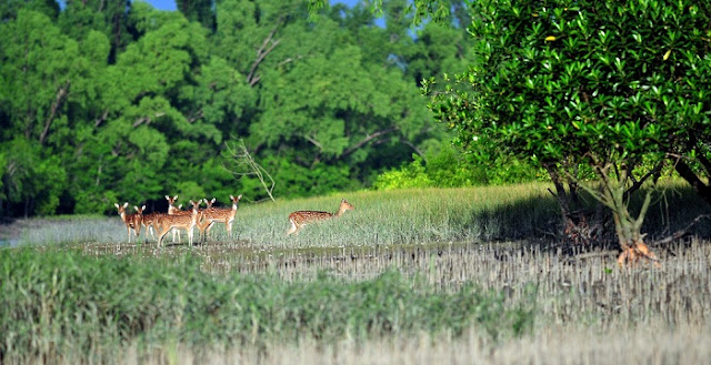 Sundarban - attractive natural tourist place in Bangladesh