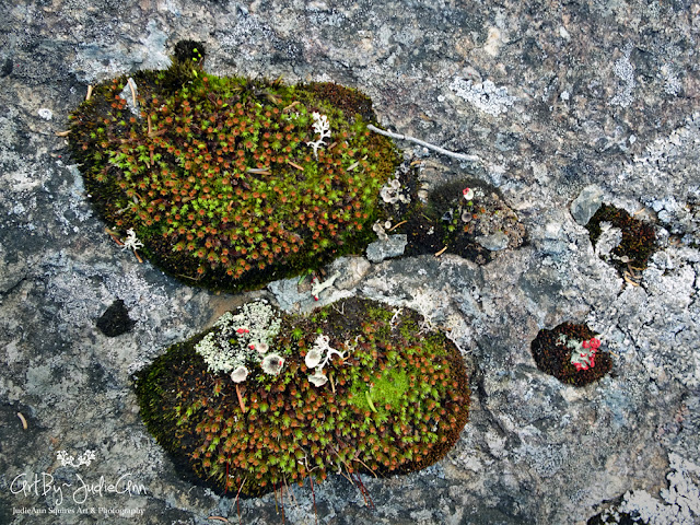 Cushions of moss and lichen