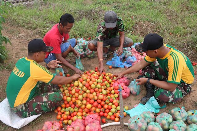 Personel Satgas Pamtas RI-PNG Bantu Panen Tomat di Kampung Sota