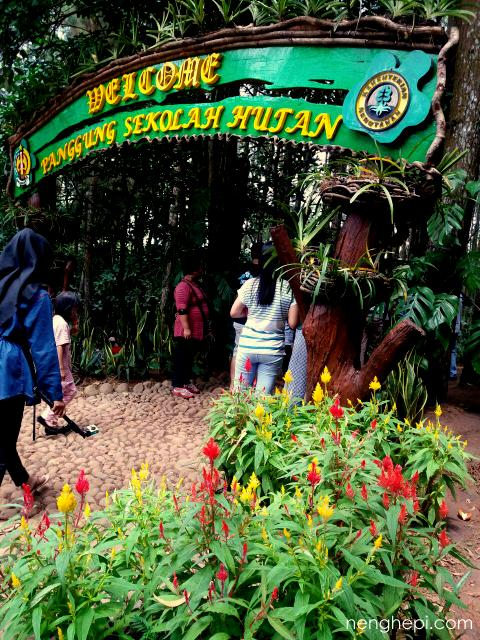 Sekolah Hutan - Hutan Pinus Imogiri, Jogja