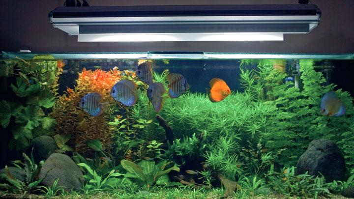 setting up a fresh water aquarium