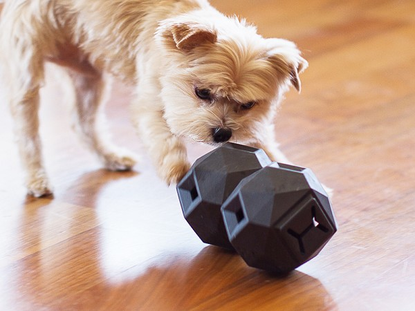 Best Toy For Small Dog At Home Alone