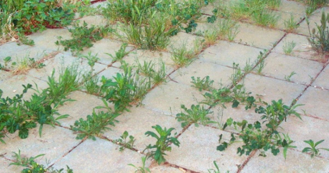 9 most effective ways to kill weeds naturally