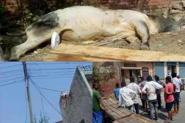 ballabhgarh-uncha-gaon-news-nandi-baba-dead-from-bijli-nangi-tar