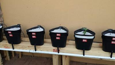 Sistem Dutch Bucket