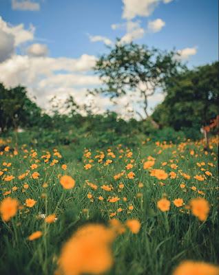 Beautiful Orange Flower Blur Background Free Stock Photo