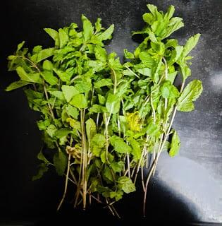 Mint or Pudina grow at home