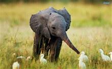 Thailand-Safari-Elephant-Rides