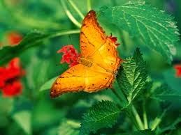 BRONSESCOVERTE: Farfalla arancione