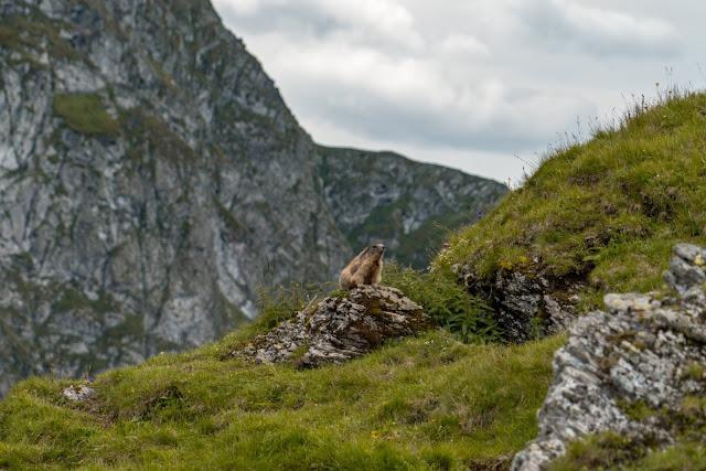 Schusterkogel  Bergwanderung Saalbach  Talschluss Hinterglemm  Wanderung-Saalbach  Wandern-Saalbach SalzburgerLand 11