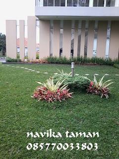 TUKANG TAMAN JAKARTA | JASA PEMBUATAN TAMAN RUMAH | PASANG TANAM RUMPUT GAJAH MINI | DISTRIBUTOR TANAMAN HIAS